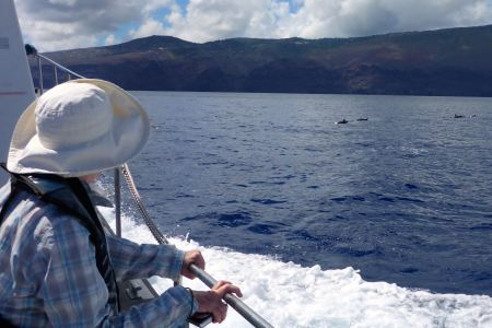 Dolphin watching, St Helena