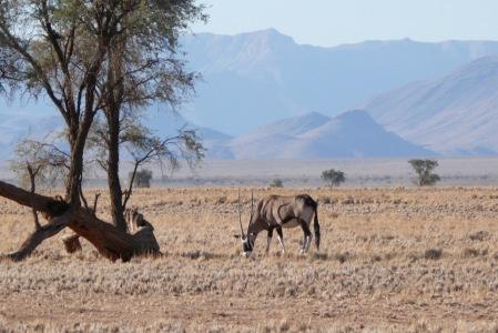 Namibia Select 090616  - 10