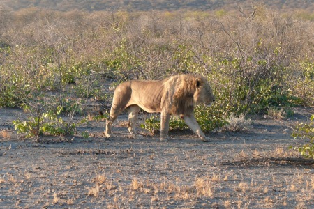 Namibia Select 090616  - 210