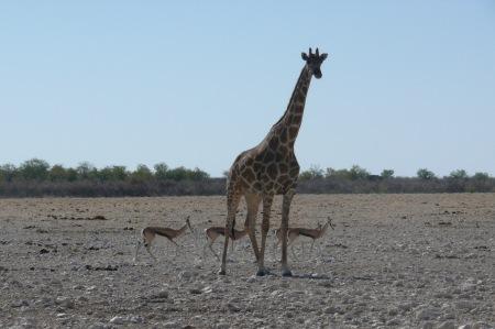 Namibia Select 090616  - 223