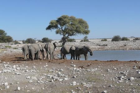 Namibia Select 090616  - 252