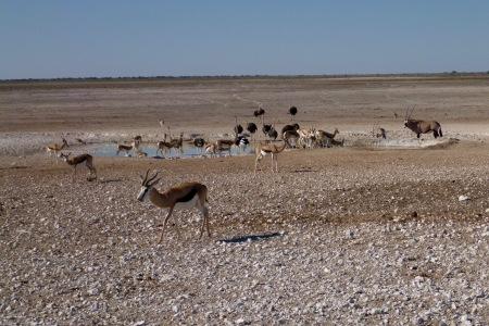 Namibia Select 090616  - 260