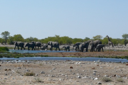 Namibia Select 090616  - 280