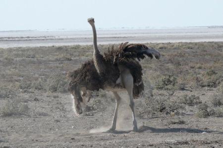Namibia Select 090616  - 295