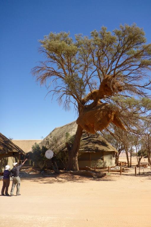 Namibia Select 090616  - 43